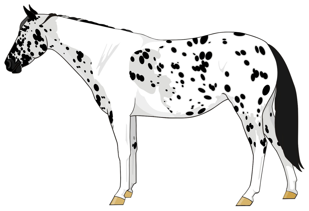 Appaloosa The Equine Tapestry
